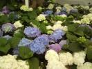 Floraart 2009.